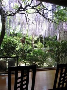 藤の花2015.5.2